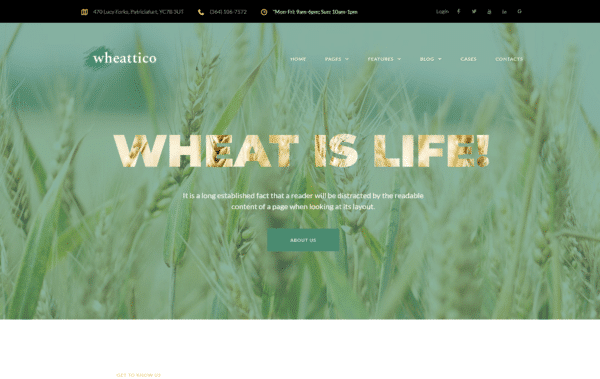 WordPress Kotisivut – Wheattico